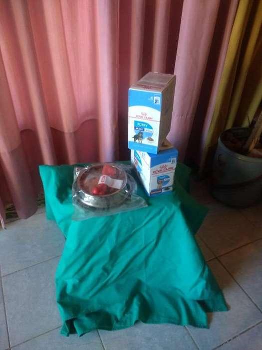 Vendo cajas Pouch Húmedos (sobres) Royal Canin