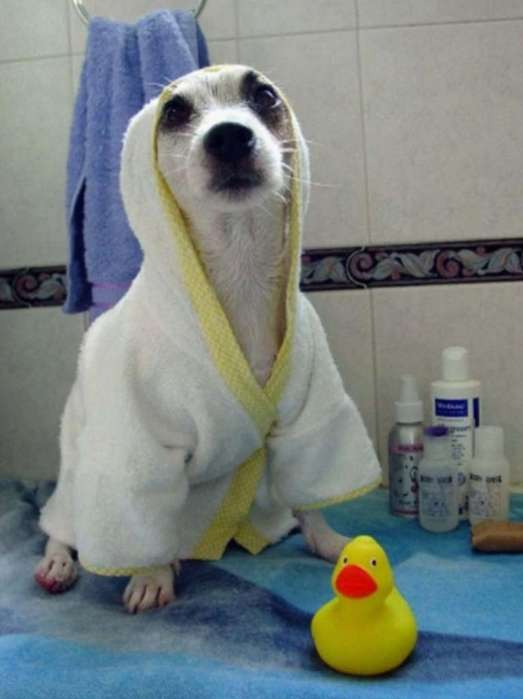 Batas de Baño para Mascotas