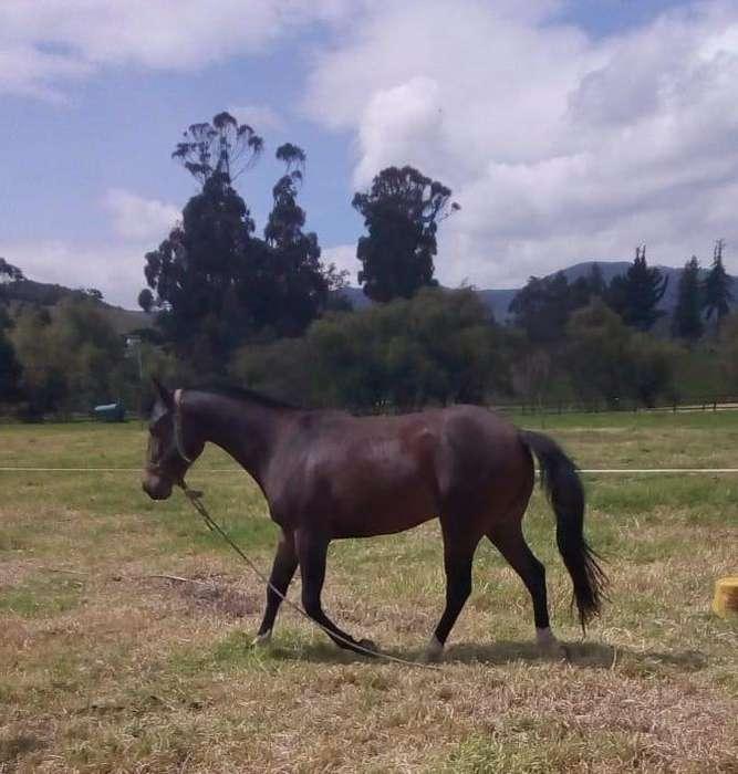 Venta caballos: Otros animales en Colombia | OLX