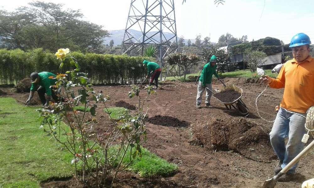 Cesped Plantas Jardines 1