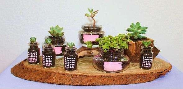 Plantas Suculentas Sobre Corteza Natural