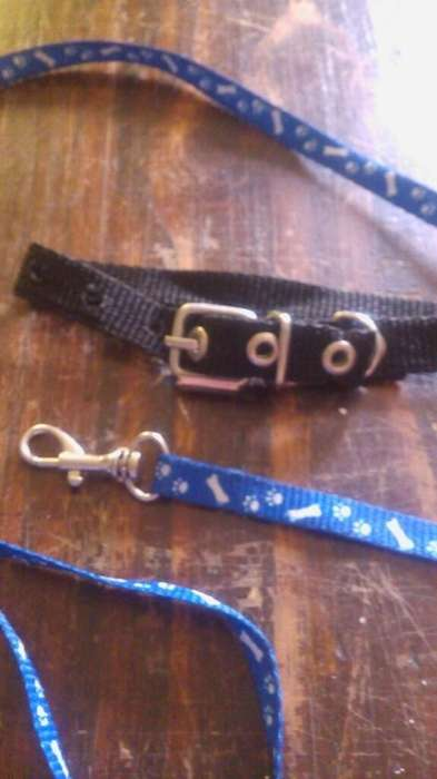 Correa Y Collar para Perro