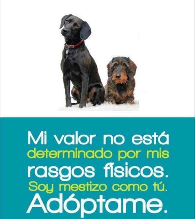 <strong>cachorro</strong>s en Adopcion