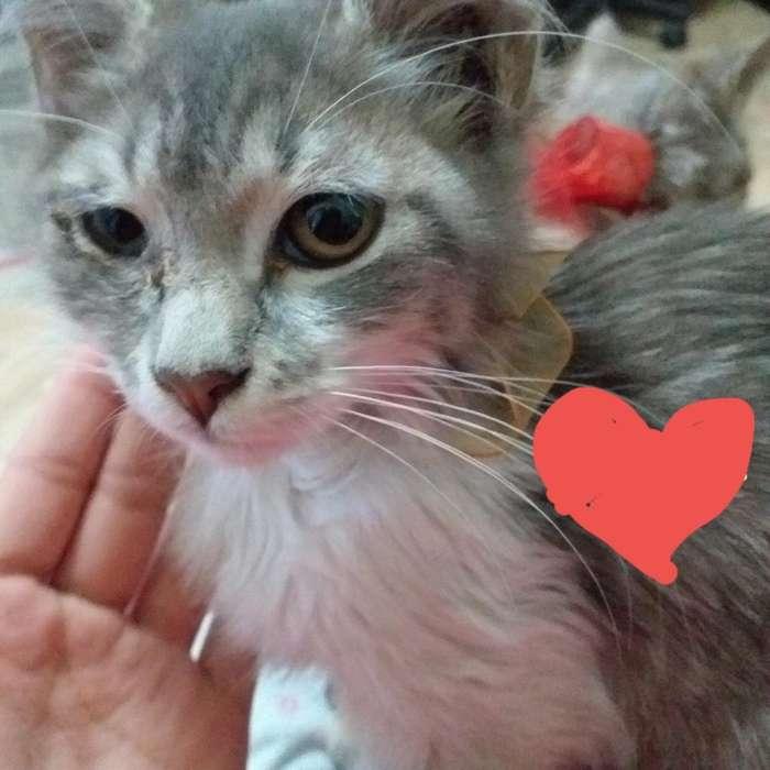 Gatitos Cariñosos Buscan Hogar.