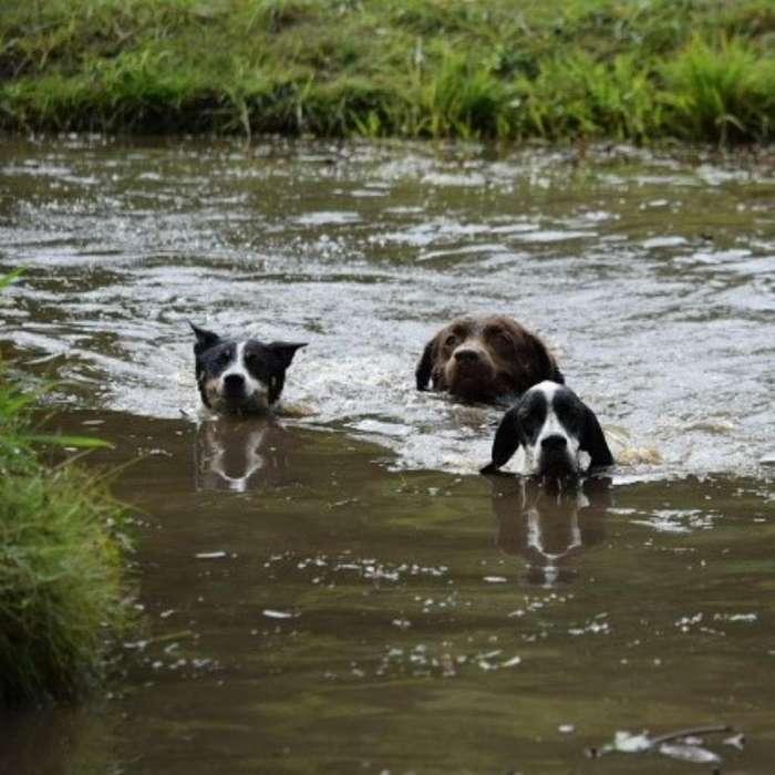 <strong>guarderia</strong> Canina CANCAN MASCOTAS