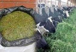Trabajador  agricola sector sierra Porcinos pollos, gallinas  servicios en General