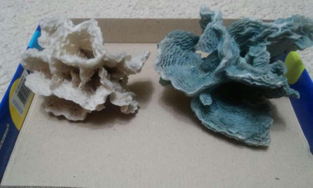 Corales para Peceras