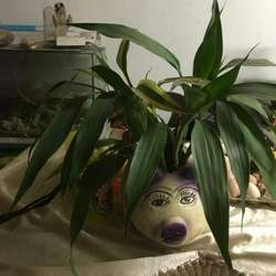 Venta de Plantas