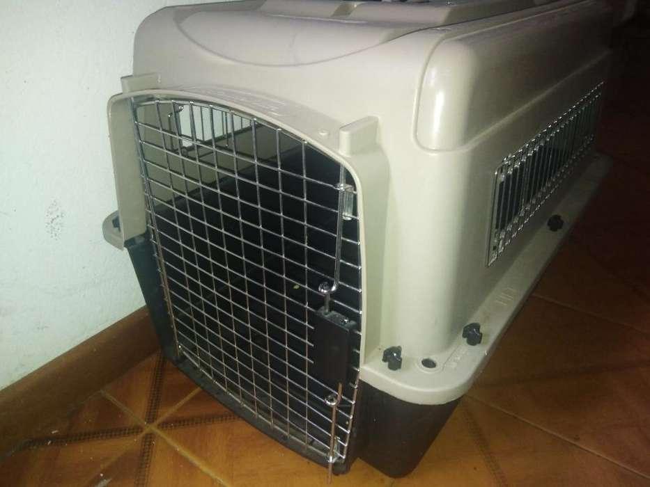 Guacal para Perro Petmate #500