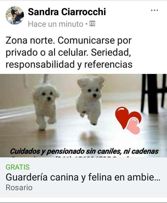 Guardera canina y felina personalizada en ambiente familiar