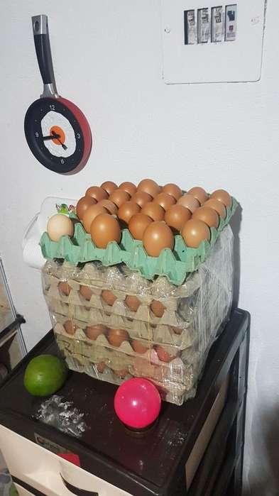 Huevo Campesino