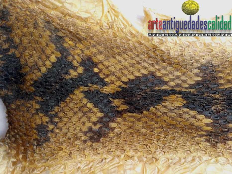 Cuero De Serpiente (pitón), Disecadas, Decorar, Exóticos, real ,cuenta con hermosos diseños naturales.