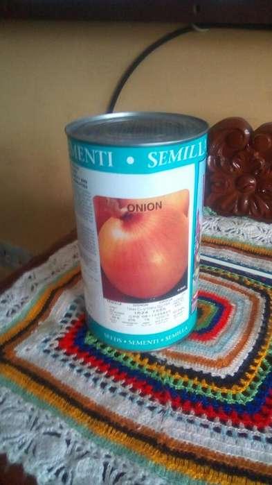 Semilla de Cebolla Westar 1 Libra