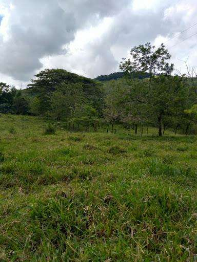 VENTA DE LOTES EN CAMBIA MANIZALES MANIZALES 2790-18529