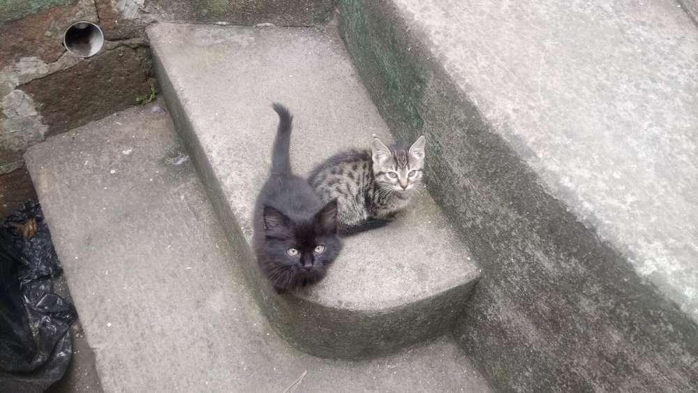 Se Da en Adopción Un Gato Y Una Gata