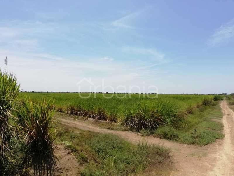 Venta de Terreno agrícola en Colan