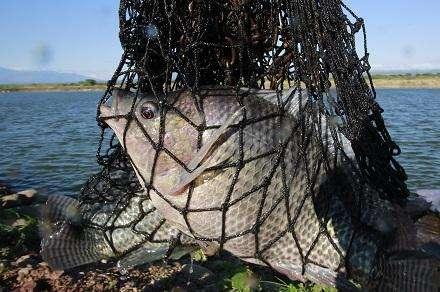Proyectos piscícolas con impacto ambiental