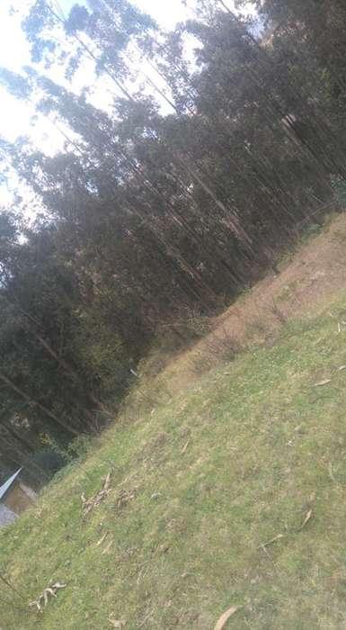 Venta de <strong>terreno</strong> de 4.000 mts. en Paccha Cuenca
