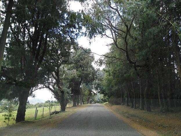 En un entorno lleno de naturaleza entre casas modernas y muy bello bosque nativo esta este lote. 50317