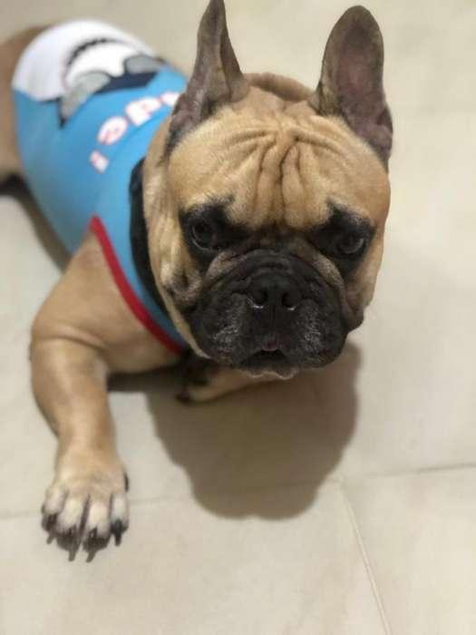 <strong>bulldog</strong> Frances