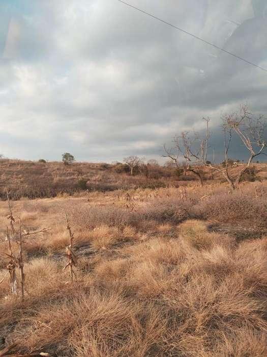 Venta de finca en el sector del Cerro de Jaboncillo - Picoaza - Portoviejo - Manabi
