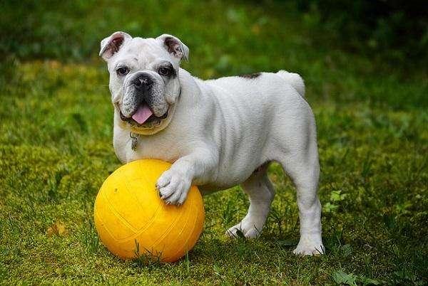 Escuela Canina / <strong>adiestramiento</strong> CANINO