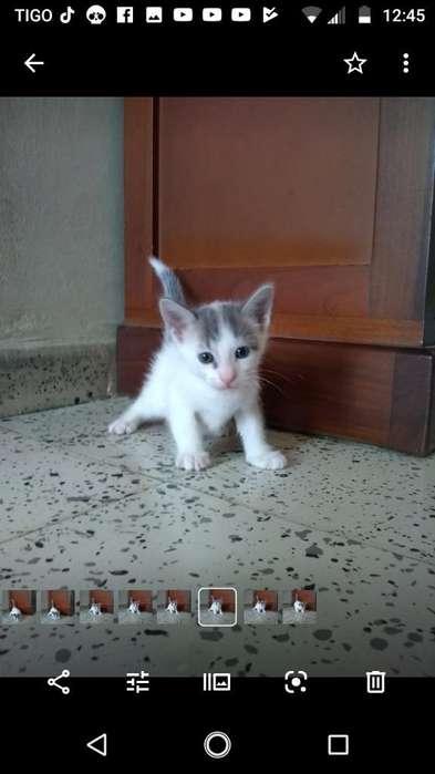 Se Regalan Hermosos <strong>gatito</strong>s