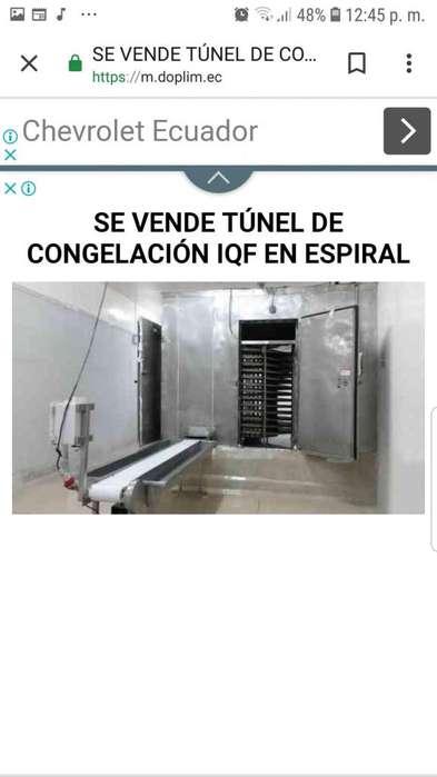 Venta de congelador IQF