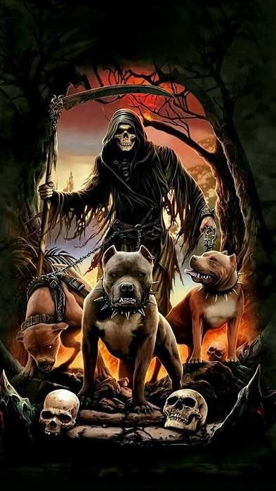 Paseador de <strong>perros</strong> Real de Minas Y Mutis