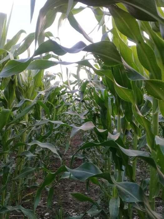 Propiedad Agricola o Piscicola(camaron)