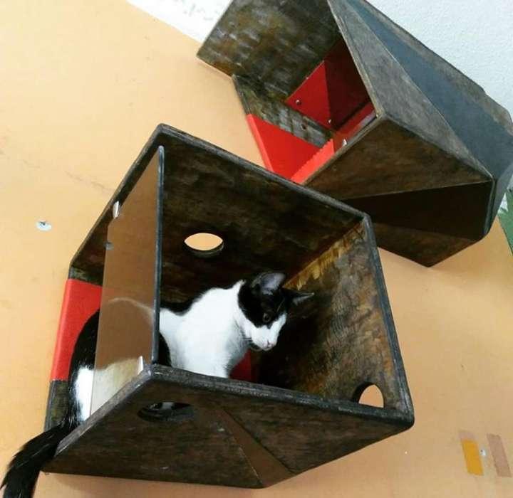 Casa para Gato Dúplex