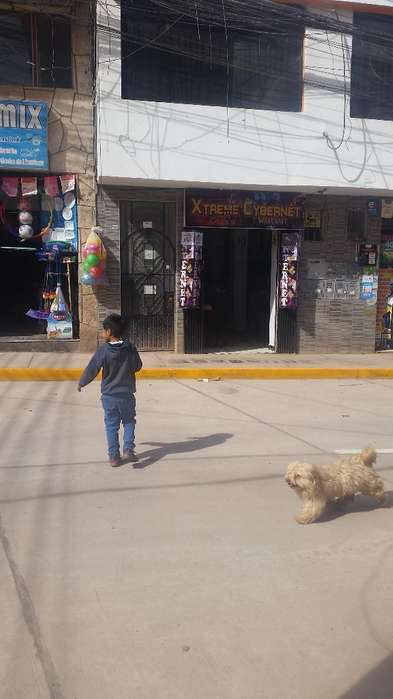 Alquiler de Local Comercial Rosaspata