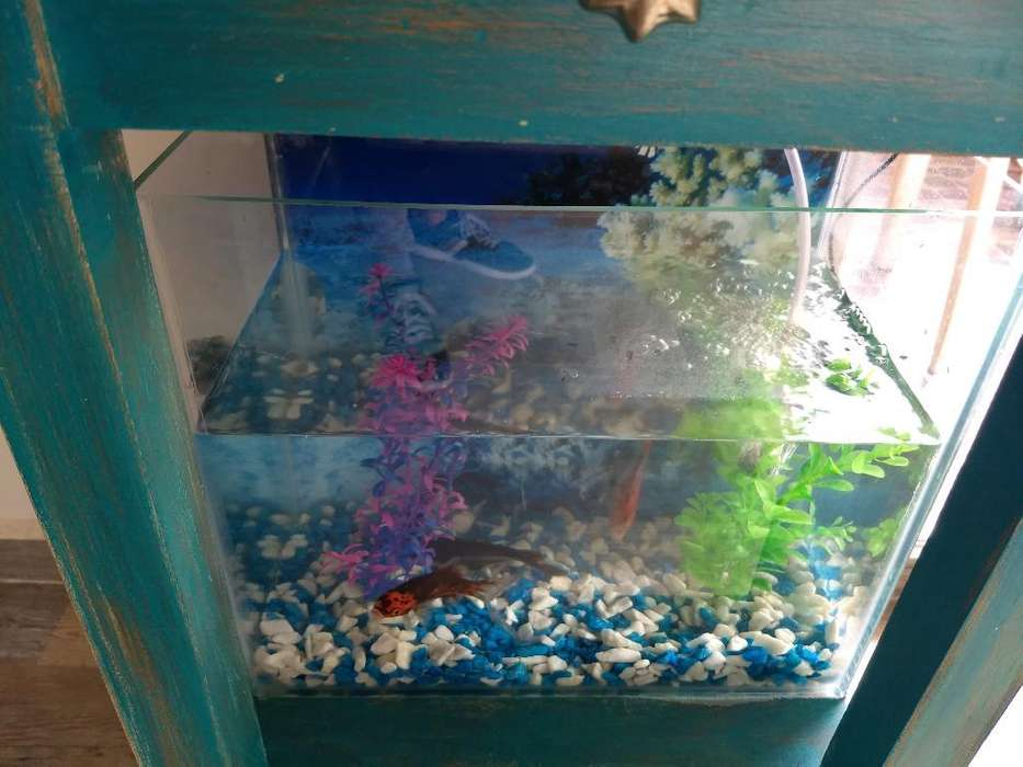 Pescera Completa Barata
