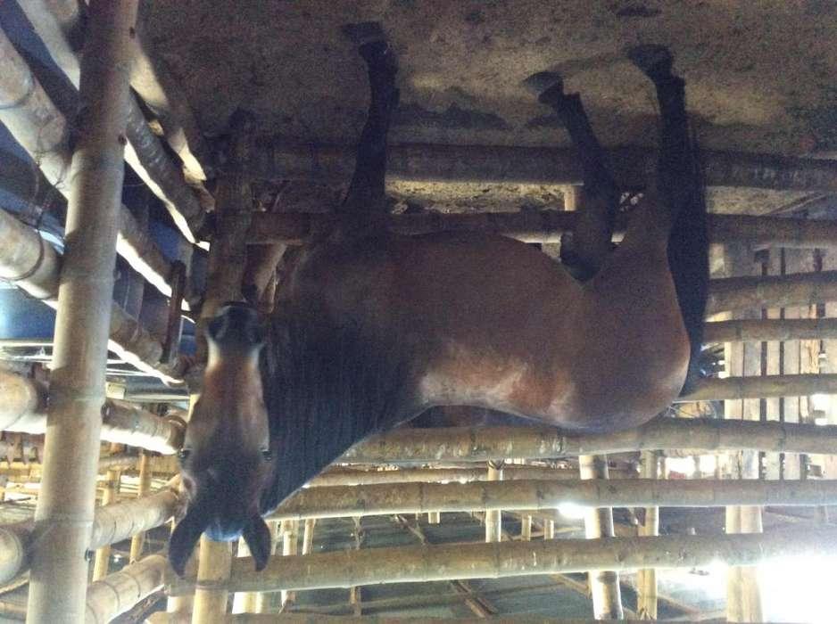 Vendo <strong>caballo</strong> trocha