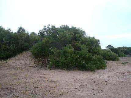 Lote en Venta en Las gaviotas, Mar azul US 270000