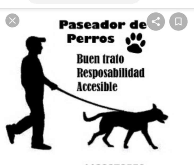 Paseador de <strong>perros</strong> a Domicilio