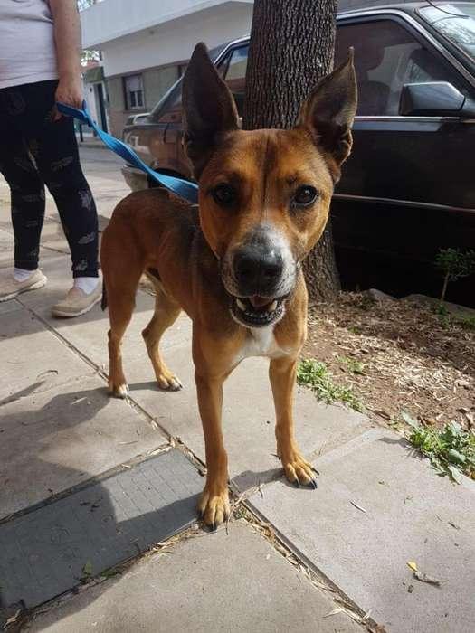 Roni perro de 4 años espera un hogar donde lo cuiden y amen mucho