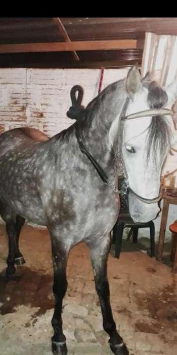7 Equinos Yegua Y Caballo Razudos