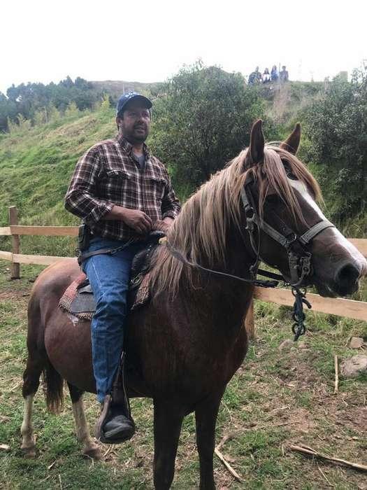 Montas de <strong>caballo</strong> Paso Peruano Puro