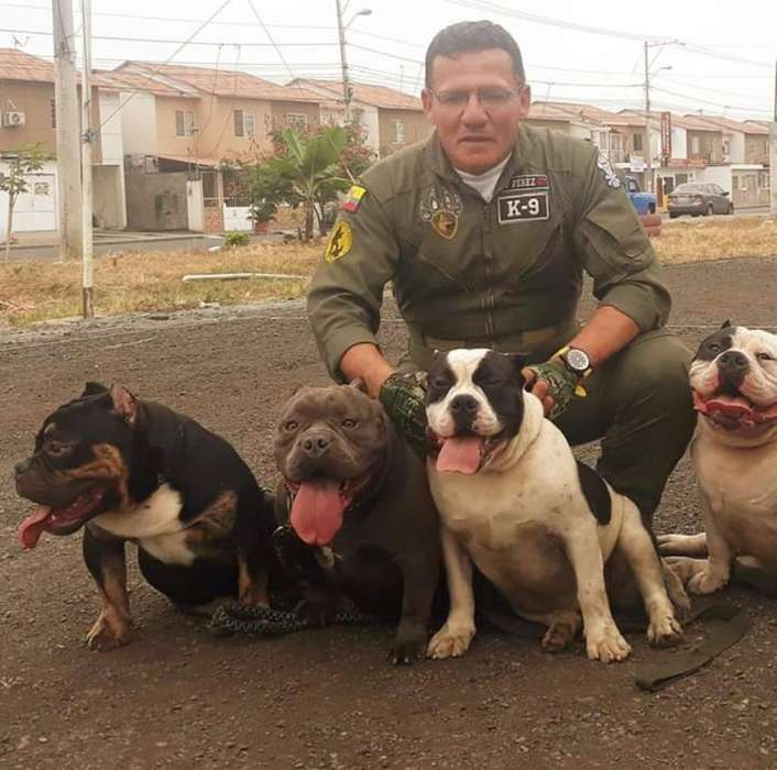 <strong>adiestramiento</strong> Canino Perros Elites
