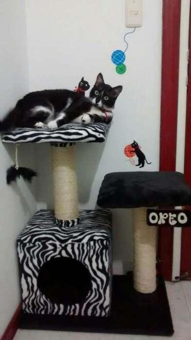 Gimnasios para <strong>gato</strong>s Maskota Shop