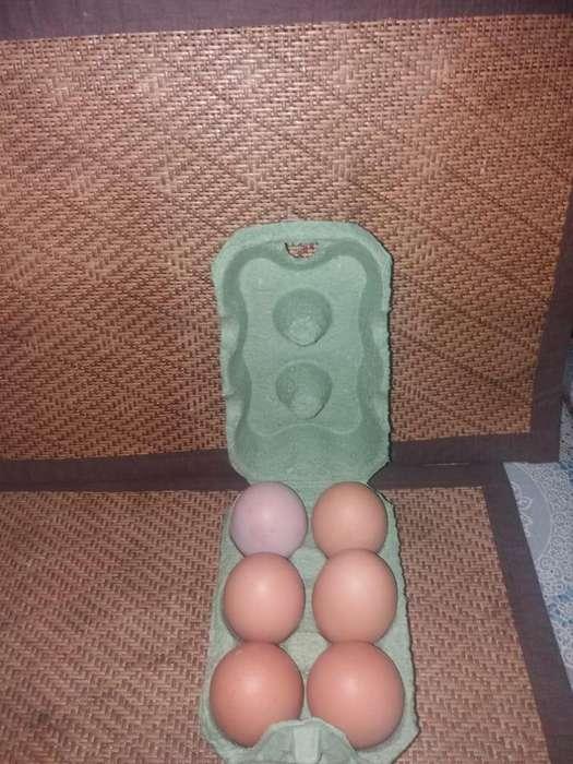 comercializadora de huevos