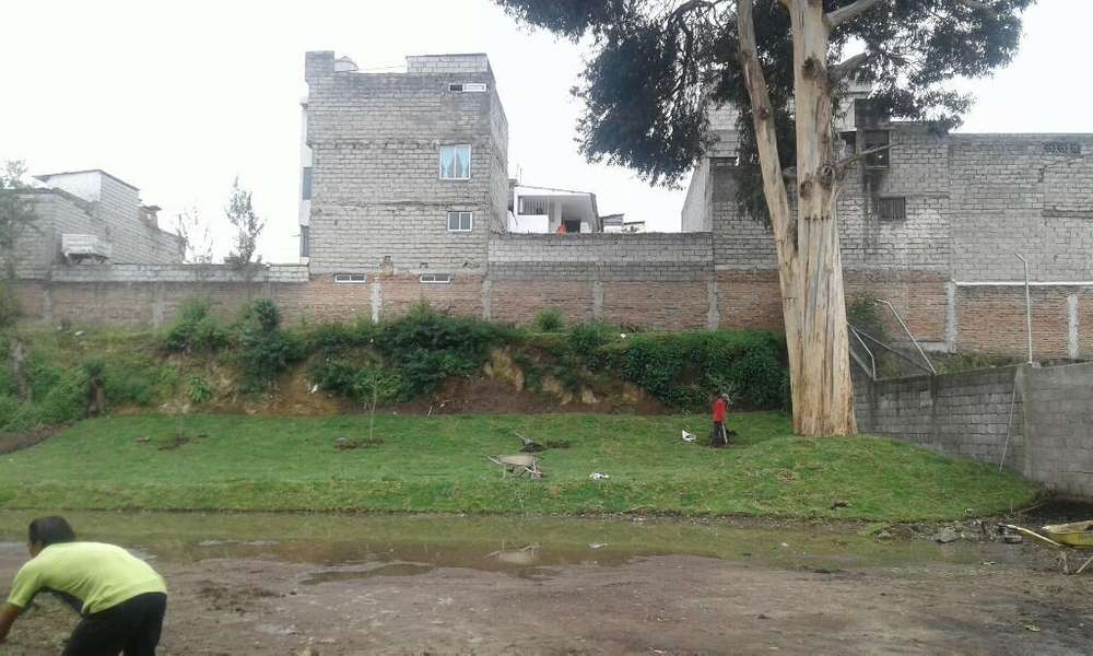 Instalacion de Cesped Natural