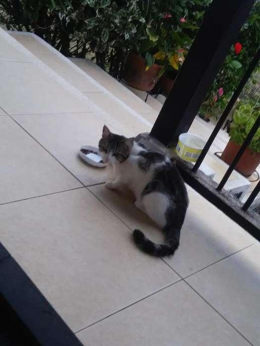 Vendo Un Gato Hermoso Y Comelon Come P20