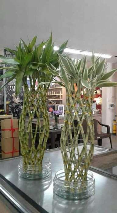 Bambú Tejido en Agua