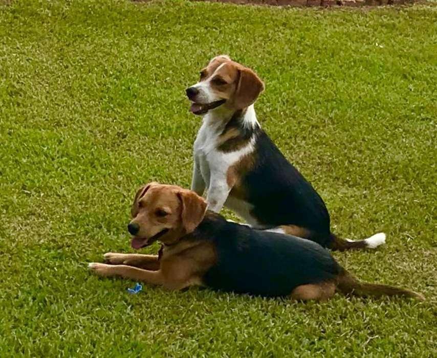 Paseador de <strong>perro</strong>s