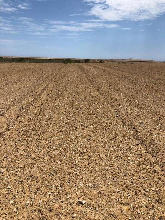 Terreno 11 hectarias Paijan Manco Capac sector 3 por carretera al pulpar Para siembra de moringa o <strong>granja</strong>s