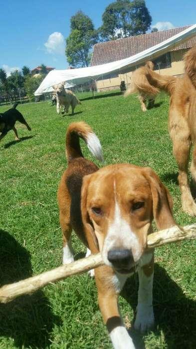 Guarderia Campestre Doggiesgarden