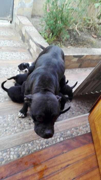 Doy en adopcion lindos <strong>cachorro</strong>s