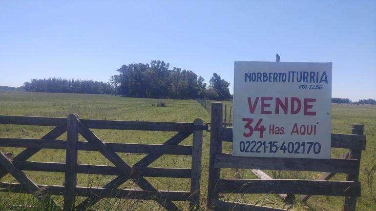 Campo de 34has en Veronica, Ptdo de Punta Indio